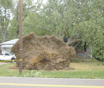 tree on house 2